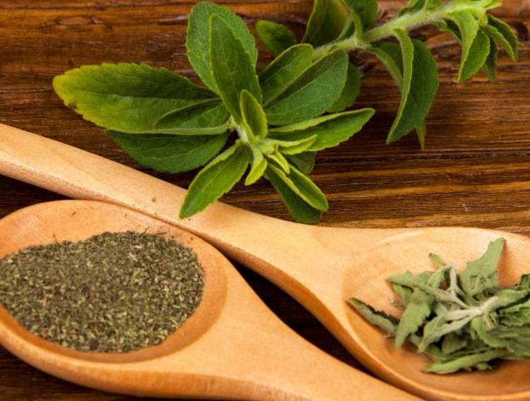 fresh Stevia plant, dried Stevia leaves and powdered Stevia in wooden spoons